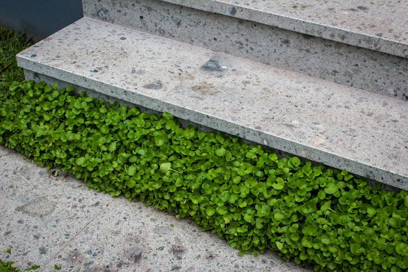 Oxford Porphyry Steps